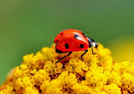 昆虫能看得见颜色、闻得到气味和听得到声音吗