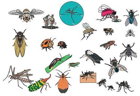 冬天的时候苍蝇和蚊子去哪儿了