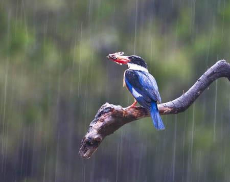 当飓风来袭时鸟儿怎么办