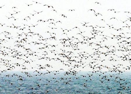 候鸟是怎么找到自己的迁徙路线的
