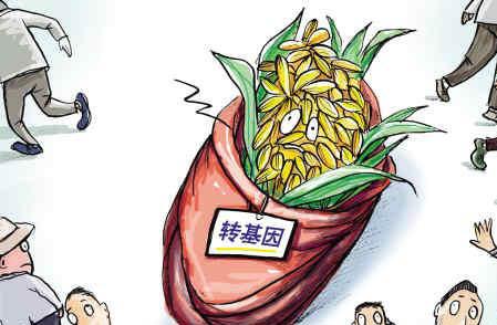 【辟谣】转基因食物导致仓鼠不孕是真的吗