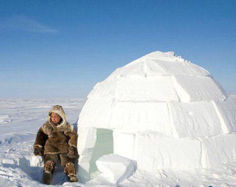 在北极生活需要使用冰箱吗
