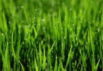 为什么远处的青草看上去更淡一些