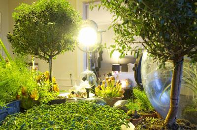 室内的光线也可以有助于植物生长