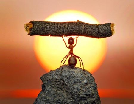 蚂蚁为什么从高处落下摔不死