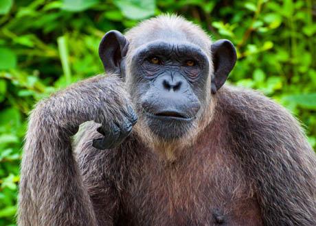 动物思维之谜 动物具有思维吗