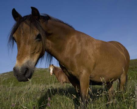 马和老鼠能呕吐吗