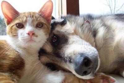 狗和猫见面就打架的原因是什么