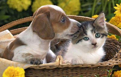狗和猫能活多久 寿命有多长