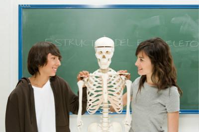 男人与女人的骨骼有什么不同