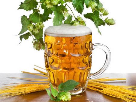 """花卉爱""""喝""""啤酒 这是真的吗"""