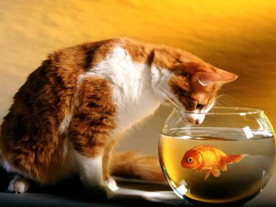 猫为什么喜欢吃鱼和老鼠