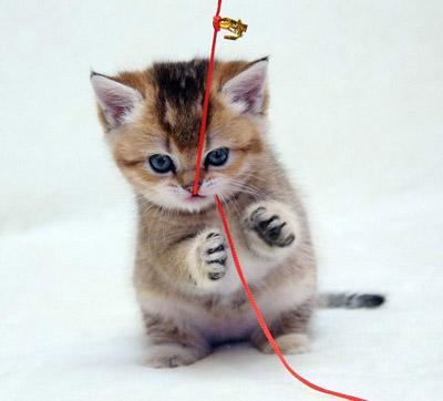 猫在什么情况下会拱背
