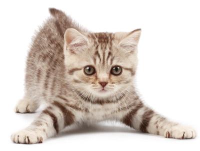 猫从高空坠下为什么容易伤到下巴