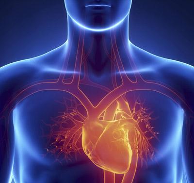 为什么心脏不会有癌症