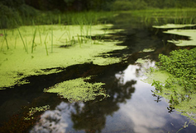 水中的藻类从哪里来及如何生长