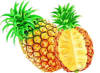 菠萝的籽长在什么地方