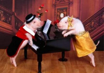 猪为什么不能抬头仰望星空