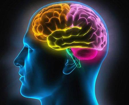 人的大脑有多重 怎么测量大脑的重量