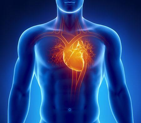 心脏一天输送的血液量有多少