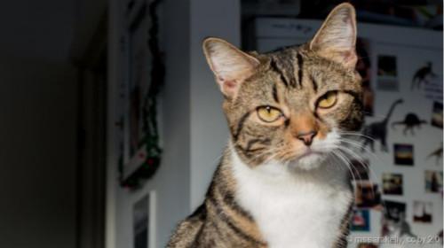 猫到底是不是自私的 科学家告诉你答案
