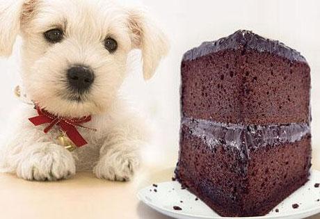 狗吃巧克力会死掉吗