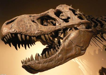 是谁最早发现了恐龙化石 恐龙化石怎么发现的