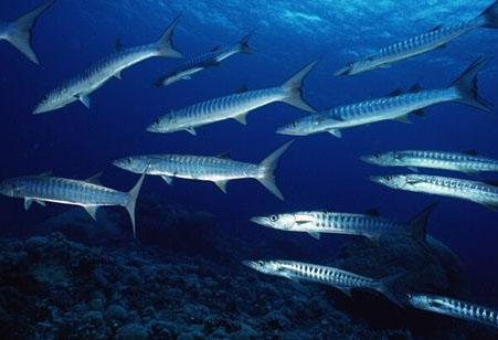 南极和北极的鱼会被冻死吗