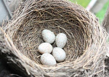 鸟蛋为啥是椭圆形