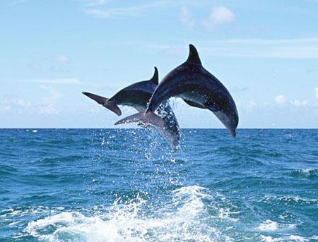 海豚是怎么睡觉的 海豚睡眠之谜