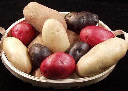 土豆红薯为何不能放在一起