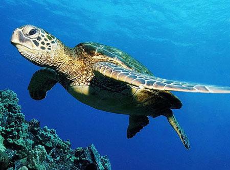 海龟辨别方向之谜