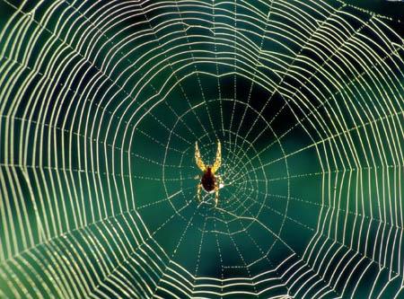 蜘蛛织网时为什么不会被网粘住