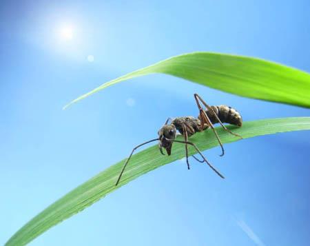 蚂蚁从60层大楼上掉下来,会摔死吗