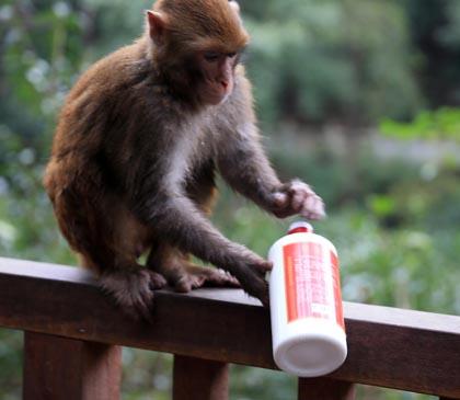 """动物也会耍酒疯 耍酒疯并非是人类""""专利"""""""