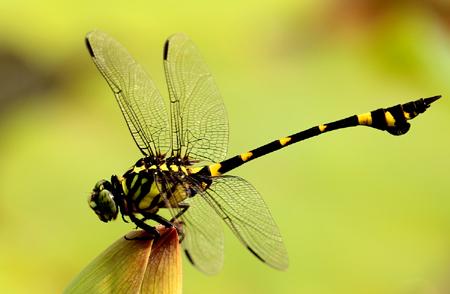 蜻蜓飞行的奥秘 为何能出色飞行