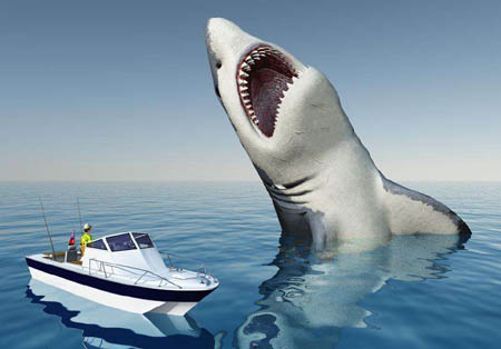 鲨鱼为什么会撞船 真相只是为了挠痒