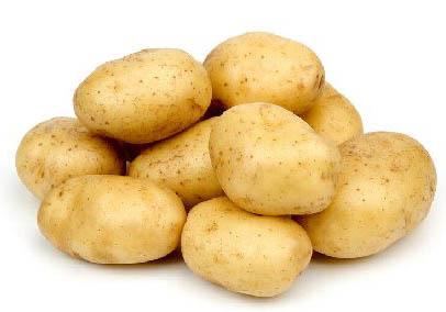 养活了世界的马铃薯土豆
