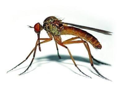 蚊子叮人不用眼睛寻找目标吗