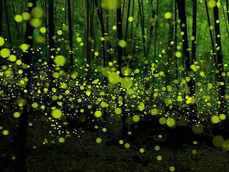 萤火虫为什么会发光 萤火虫发光之谜