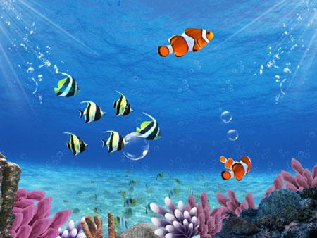 鱼也会被淹死吗