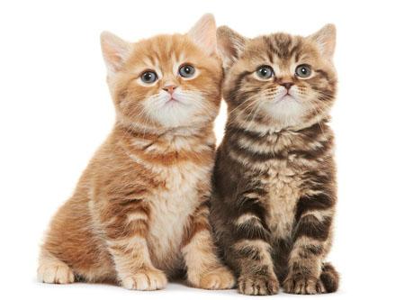 三色猫一定是母猫