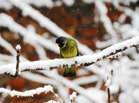 鸟类为什么要冬眠 鸟类冬眠之谜