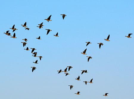 鸟类为什么要迁徙 鸟类迁徙搬家之谜