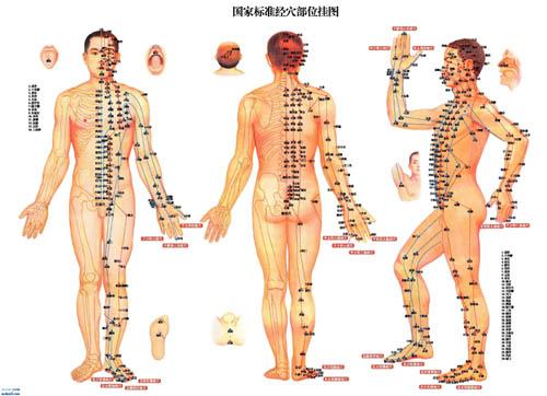 人体中的108个要害穴位都在哪里