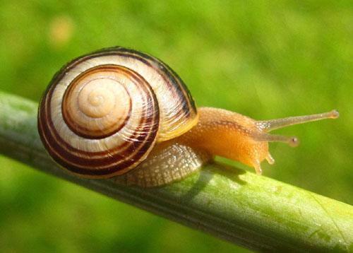 世界上牙齿最多的动物竟然是蜗牛