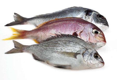 海洋中白色鱼和红色鱼有什么区别