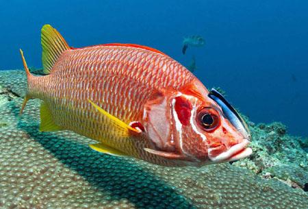 如何来判断鱼的岁数呢