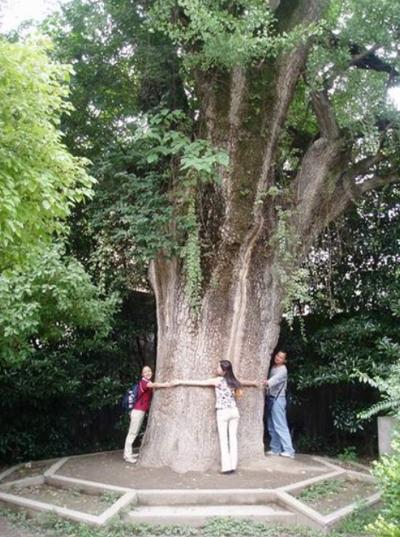 世界上最老的树