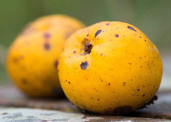 腐烂的水果不烂部分有毒吗